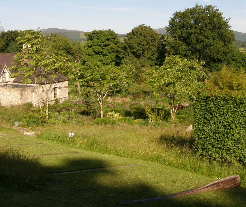 June Blake's Garden Wildflower Meadow June